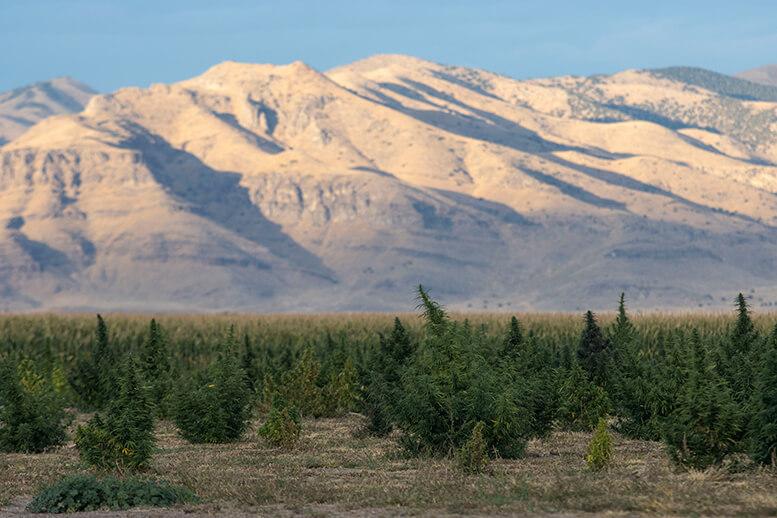 Hemp farm in Delta Utah