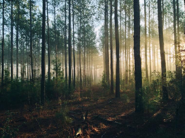 Abbildung eines idyllischen Waldes bei Sonnenschein