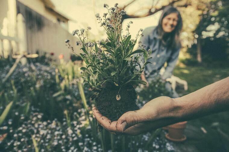 Person, die eine grüne Pflanze zeigt