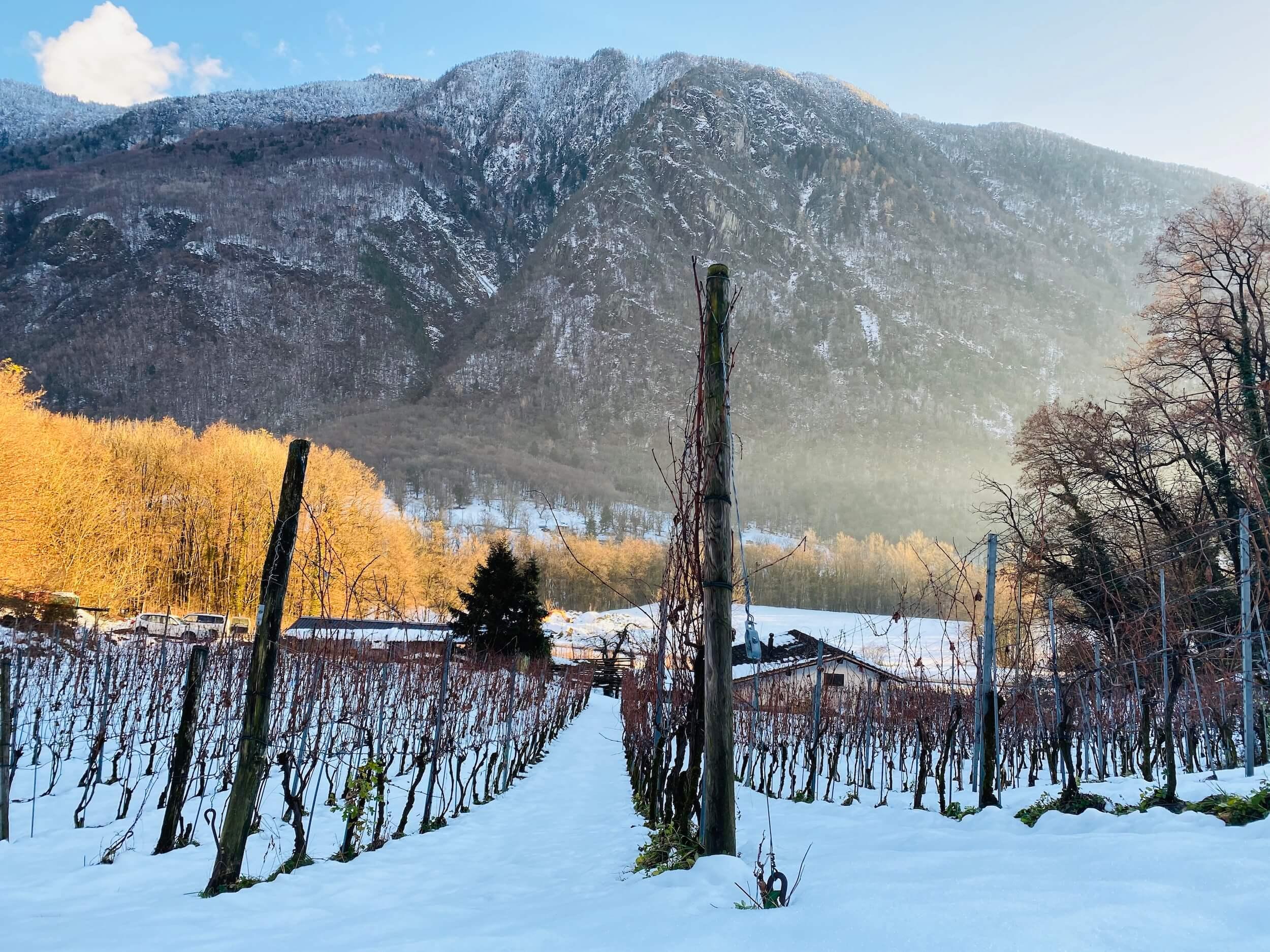 Inverno a Monticello