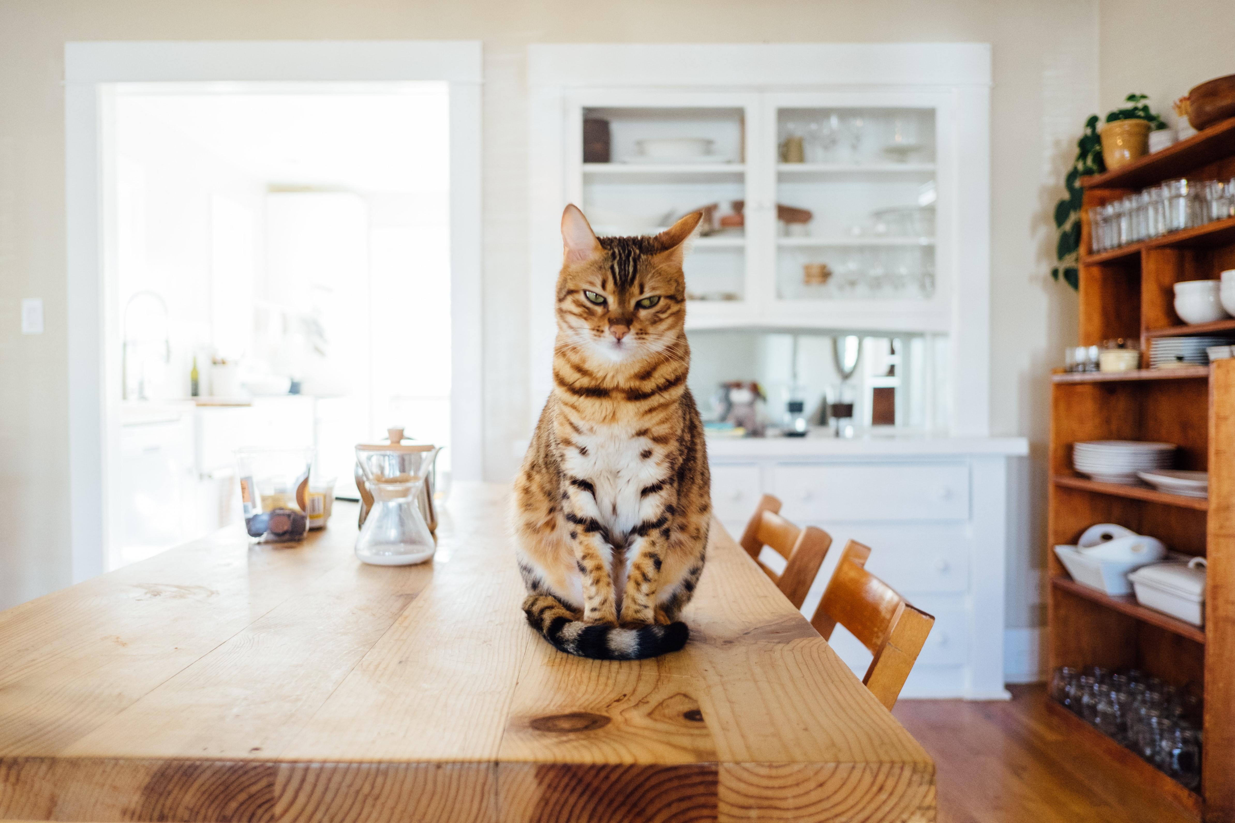 Aménager son appartement pour vivre avec un chat