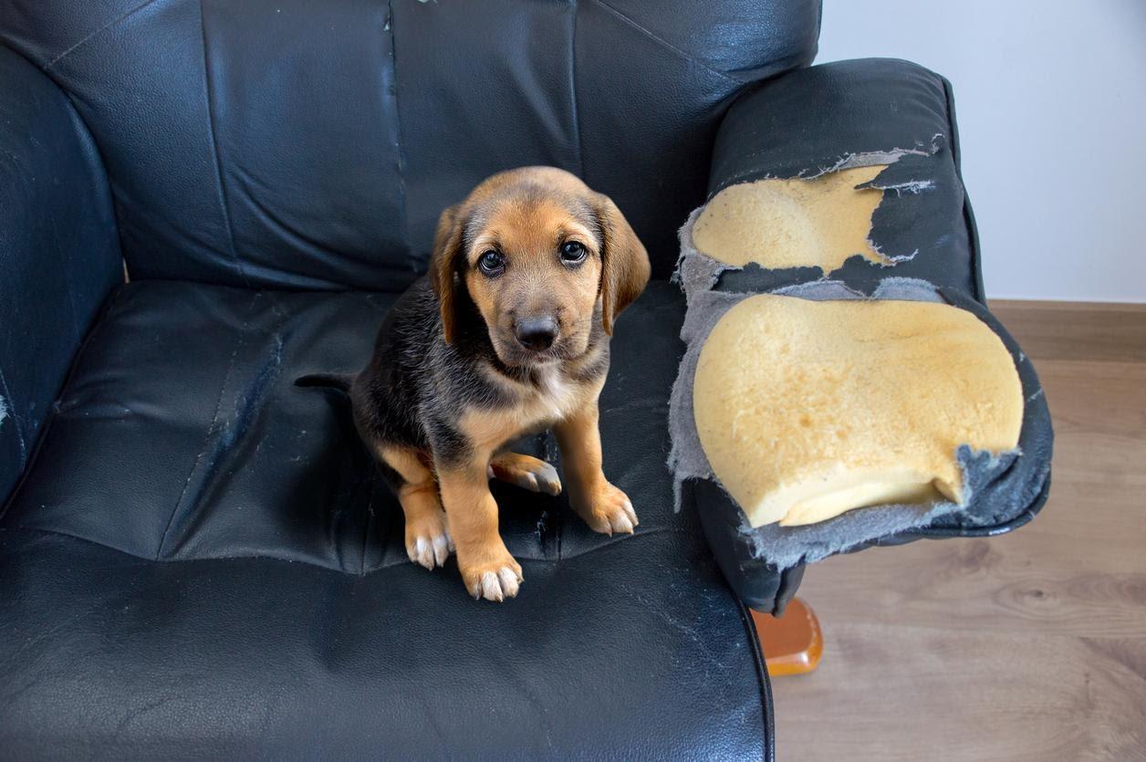 Comment réagir en cas de dégradation des meubles dans une location meublée ?