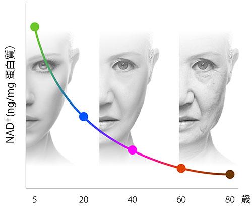 老化とともに体内から減少するNMN(NAD+)