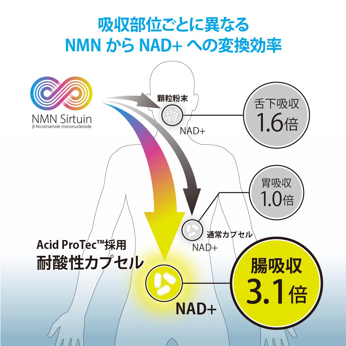 吸収部位ごとに異なるNMNからNAD+への変換効率