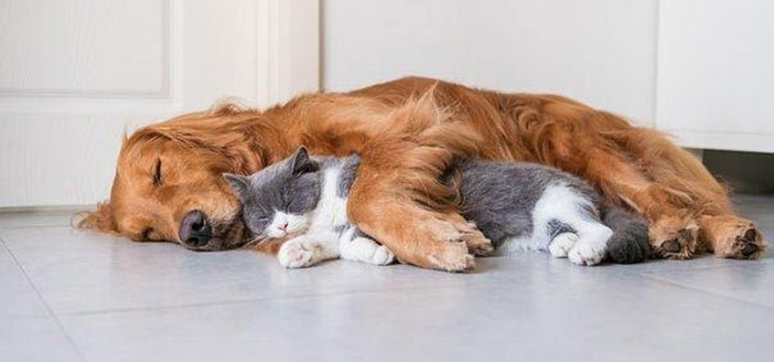 Can Pets Get Lice?