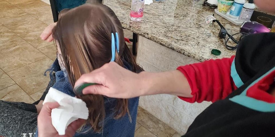 home lice treatment removal professional trust