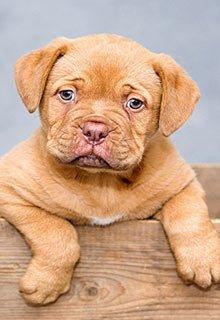 denton get lice from dog puppy child pet animal cat
