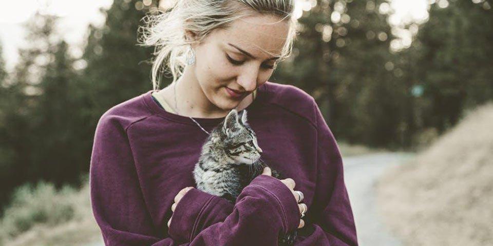 denton lice kitten cat dog puppy pet carrier infested