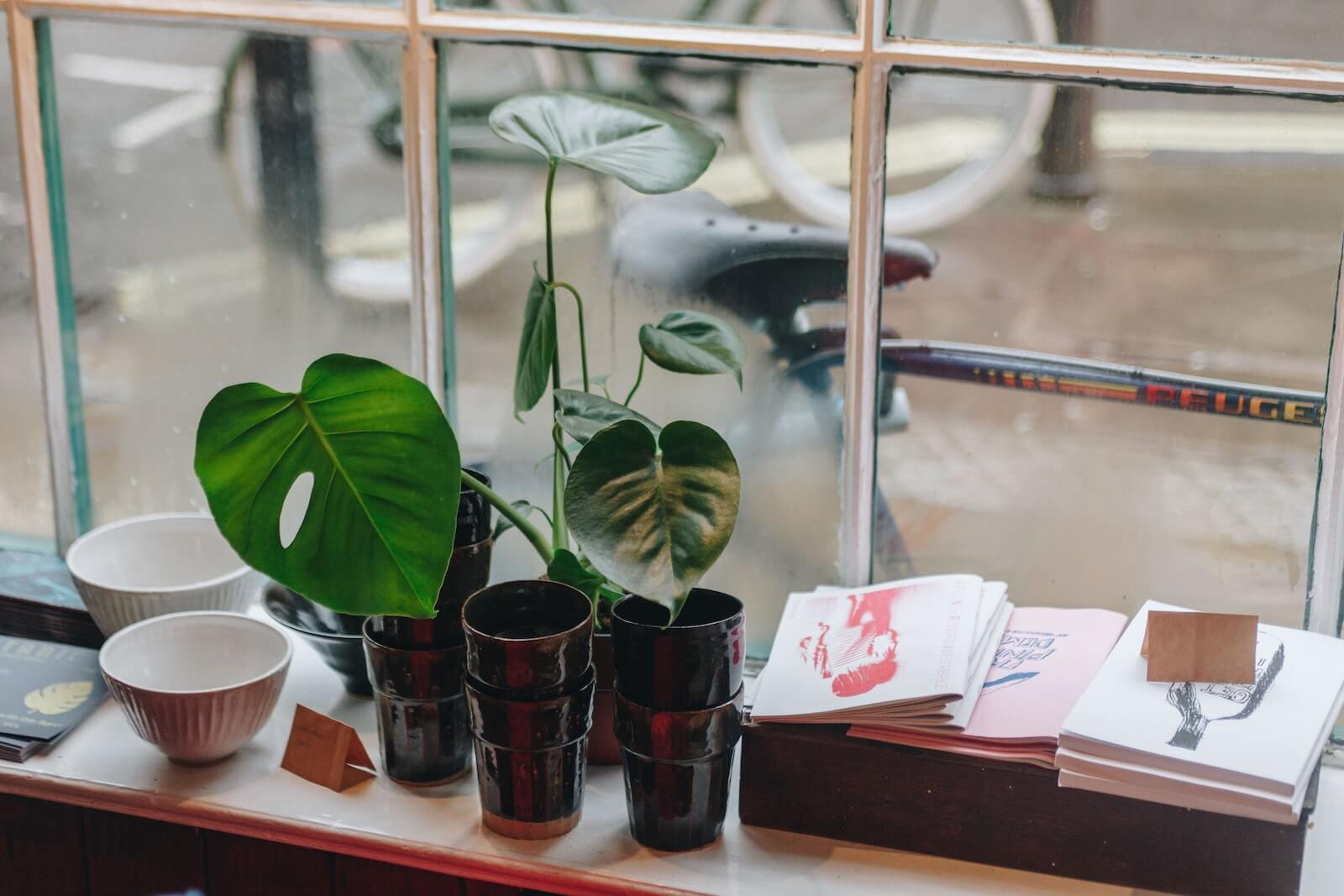 Cups and plant on window sill