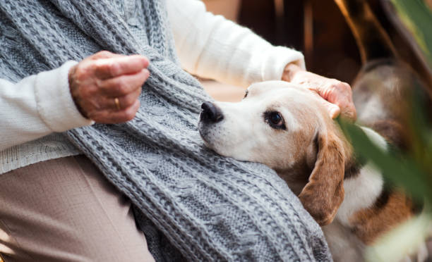 How Pets Can Improve Senior Living