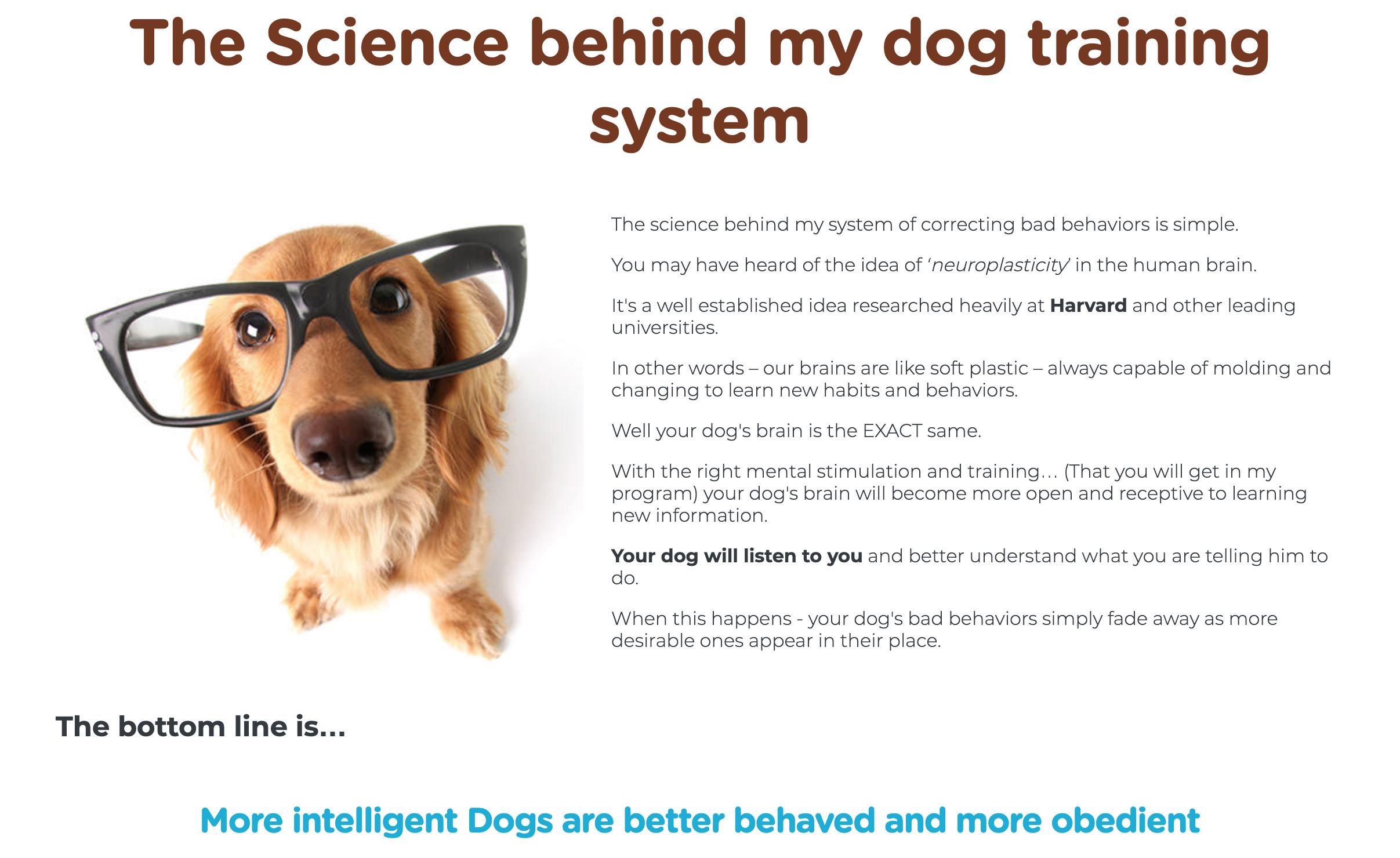 Brain Training for dogs @ scruffy the dog