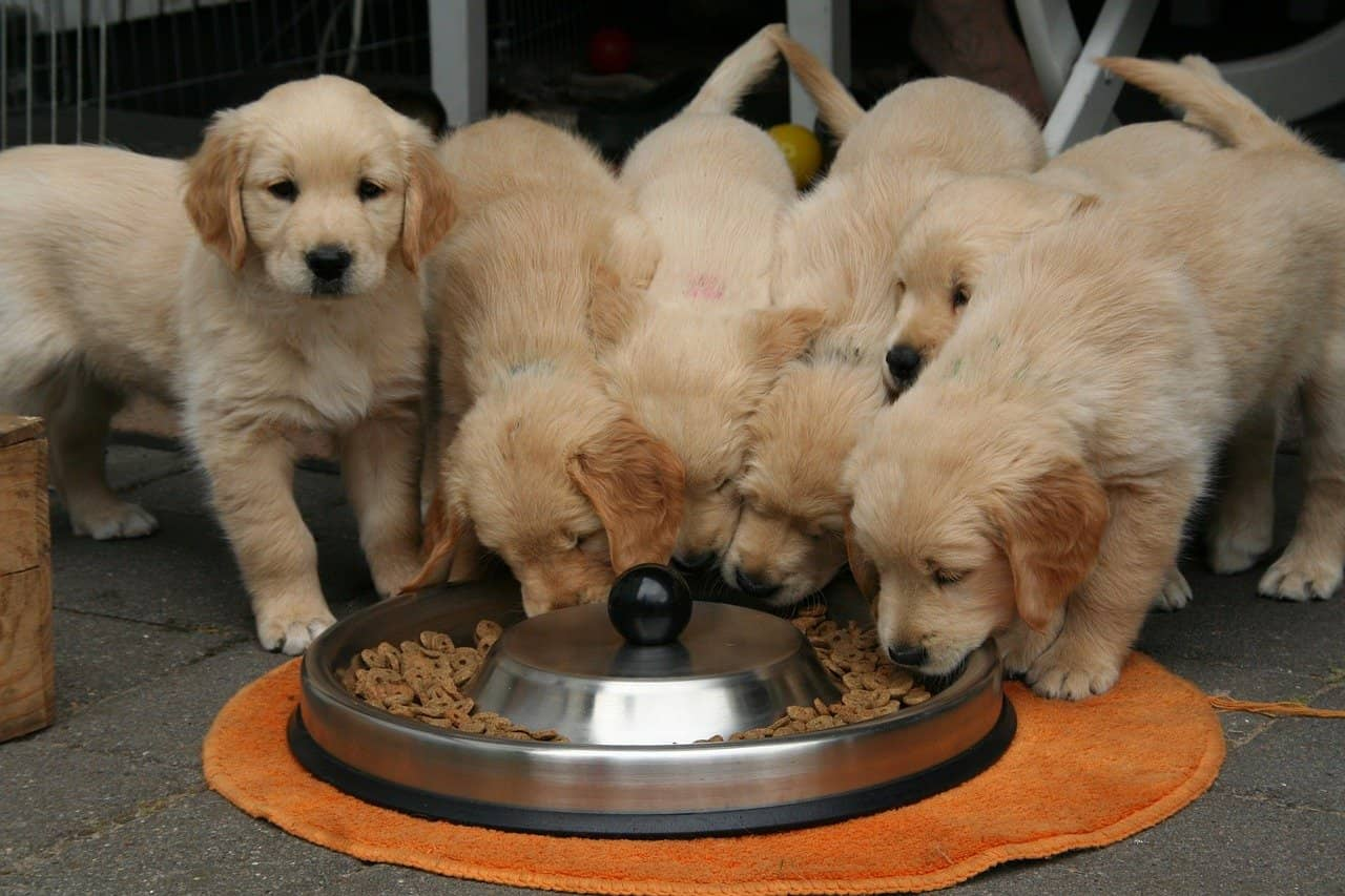 You can help your pooch meet their dietary needs with home cooked food.