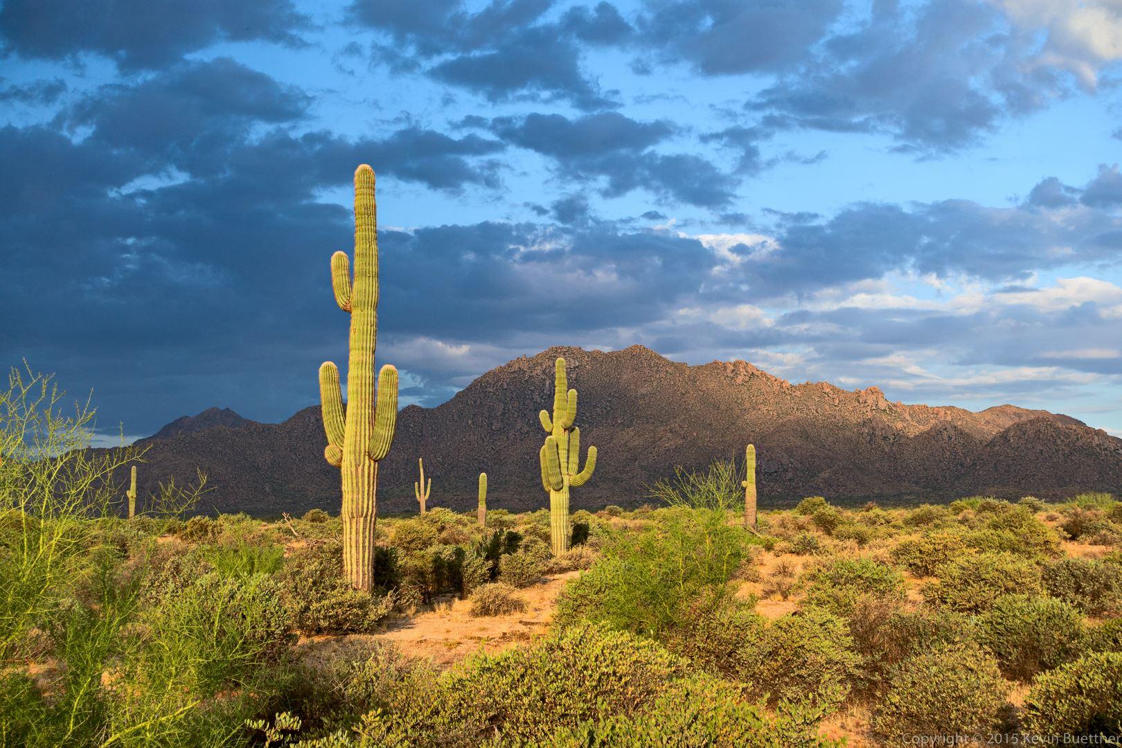 Scenic Trail in McDowell Mountain Scottsdale, AZ
