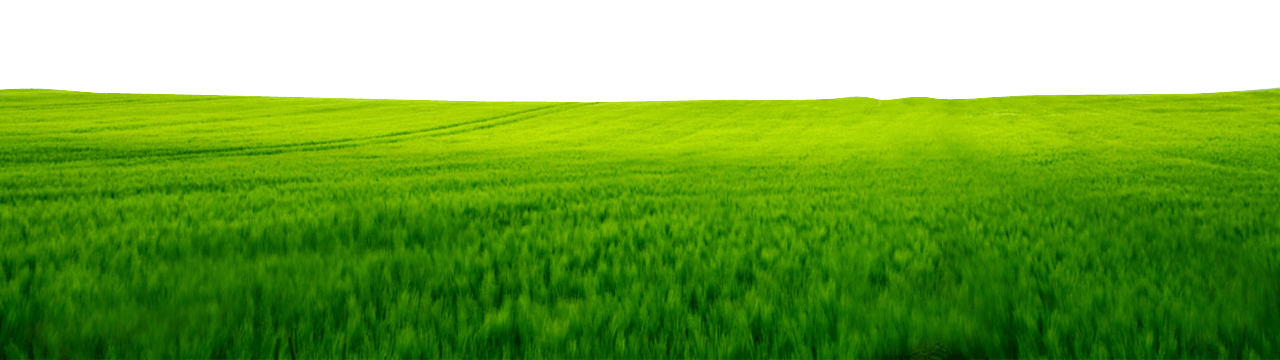 This is a scenic landscape of grass in a field.