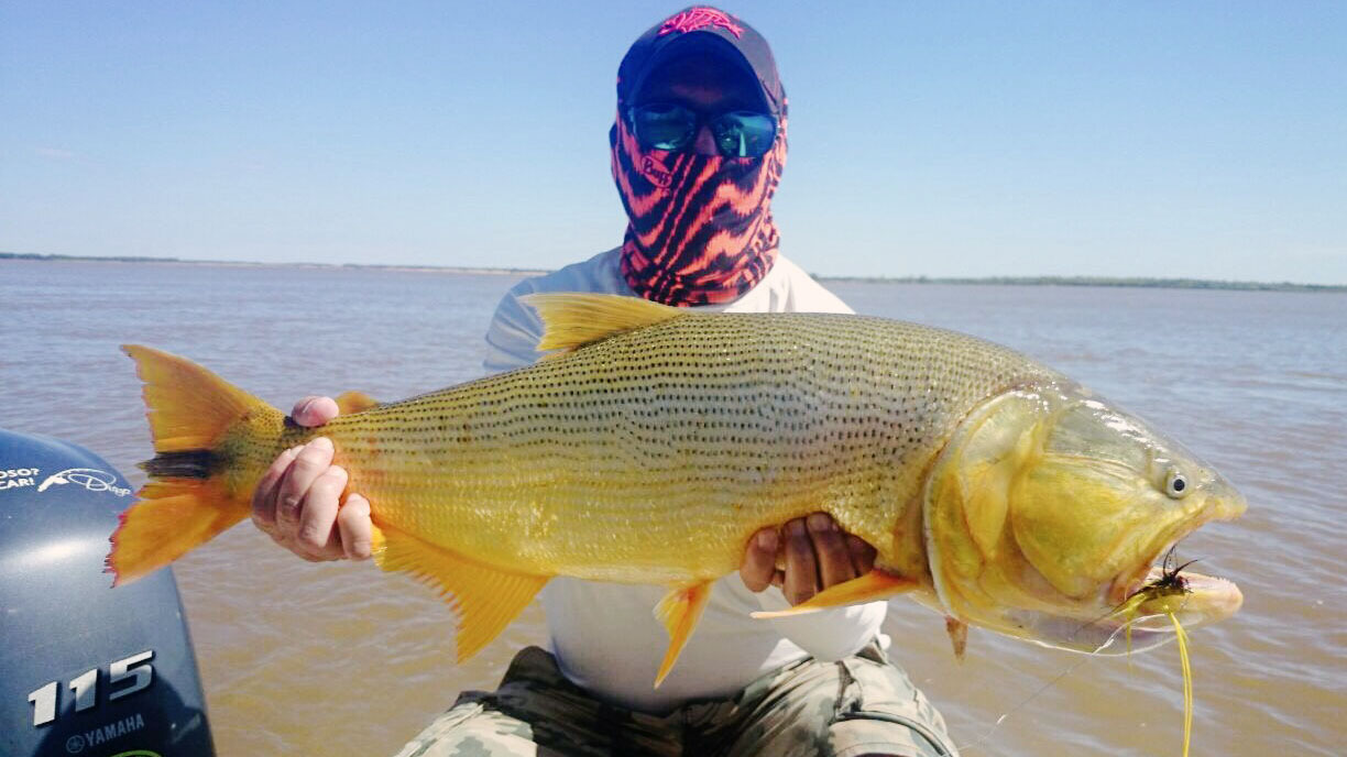 Golden Dorado Fishing - Rio Bravo Lodge