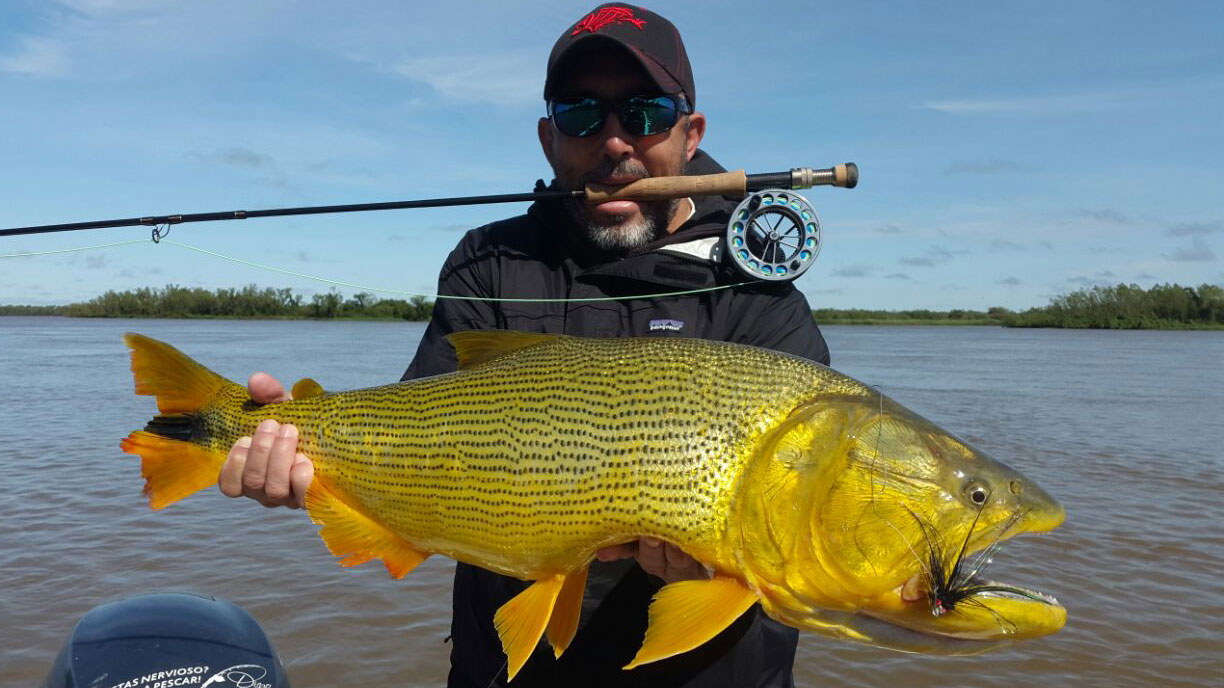 Golden Dorado Fishing Trips in Argentina