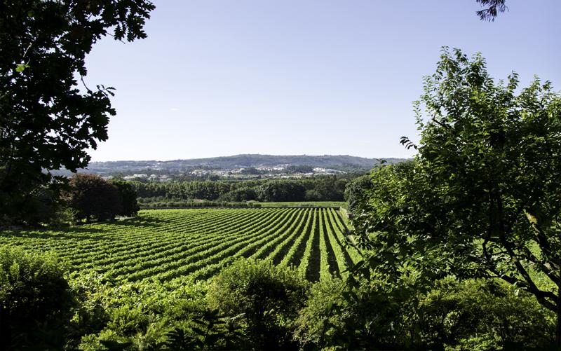 Vinho Verde wine region of Portugal