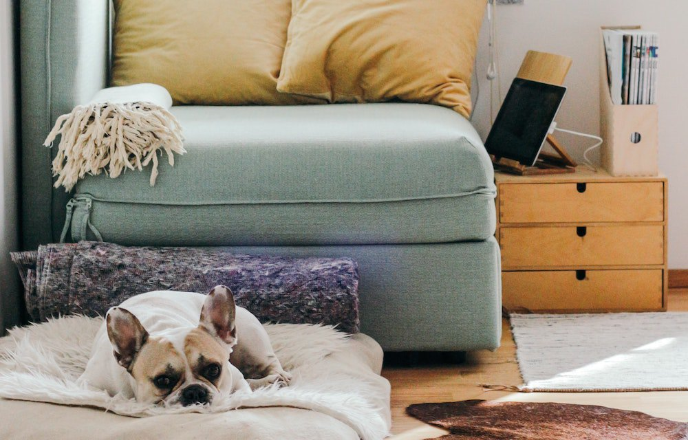 Green couch with orange pillows dog lying on blanket