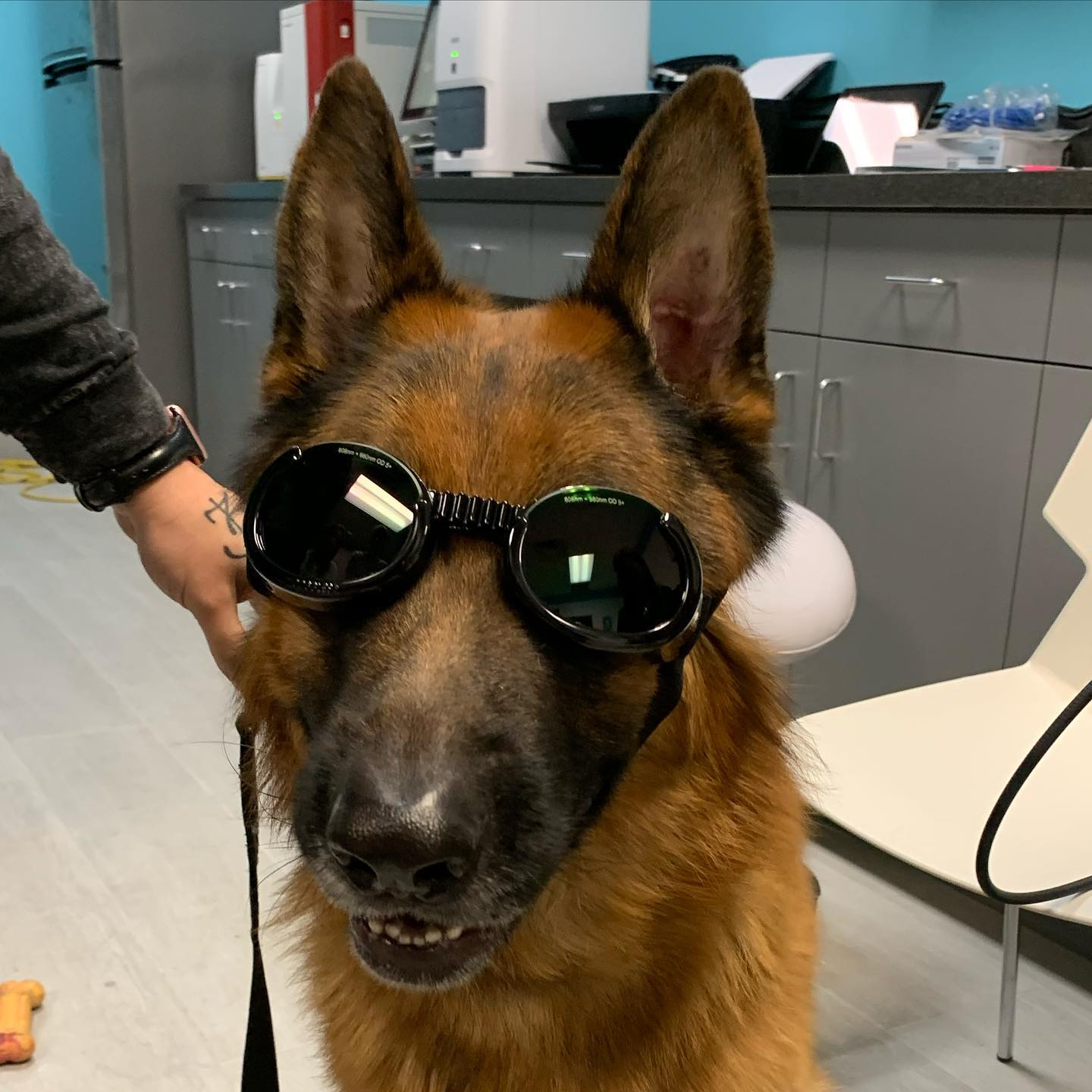 dog with glasses for laser protection