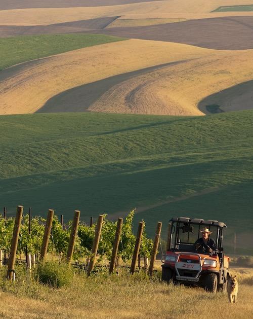 A farmer driving an ATV through a vineyard with his dog