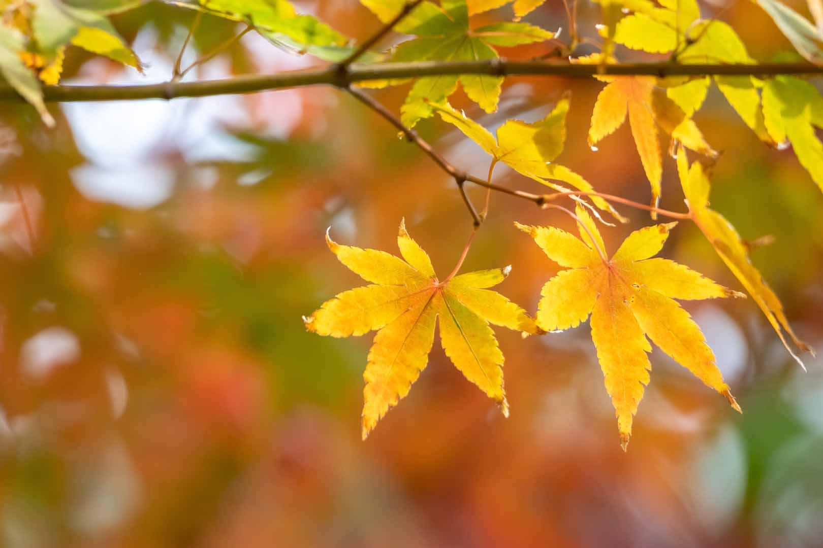 beautiful leaves on tree