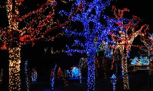 A College Station, TX property with trees decorated for the holiday season.
