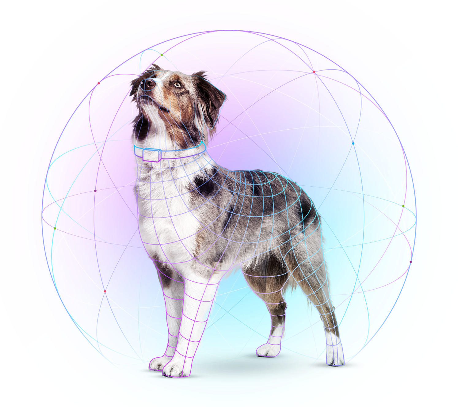 Dog with colorful lines overlayed