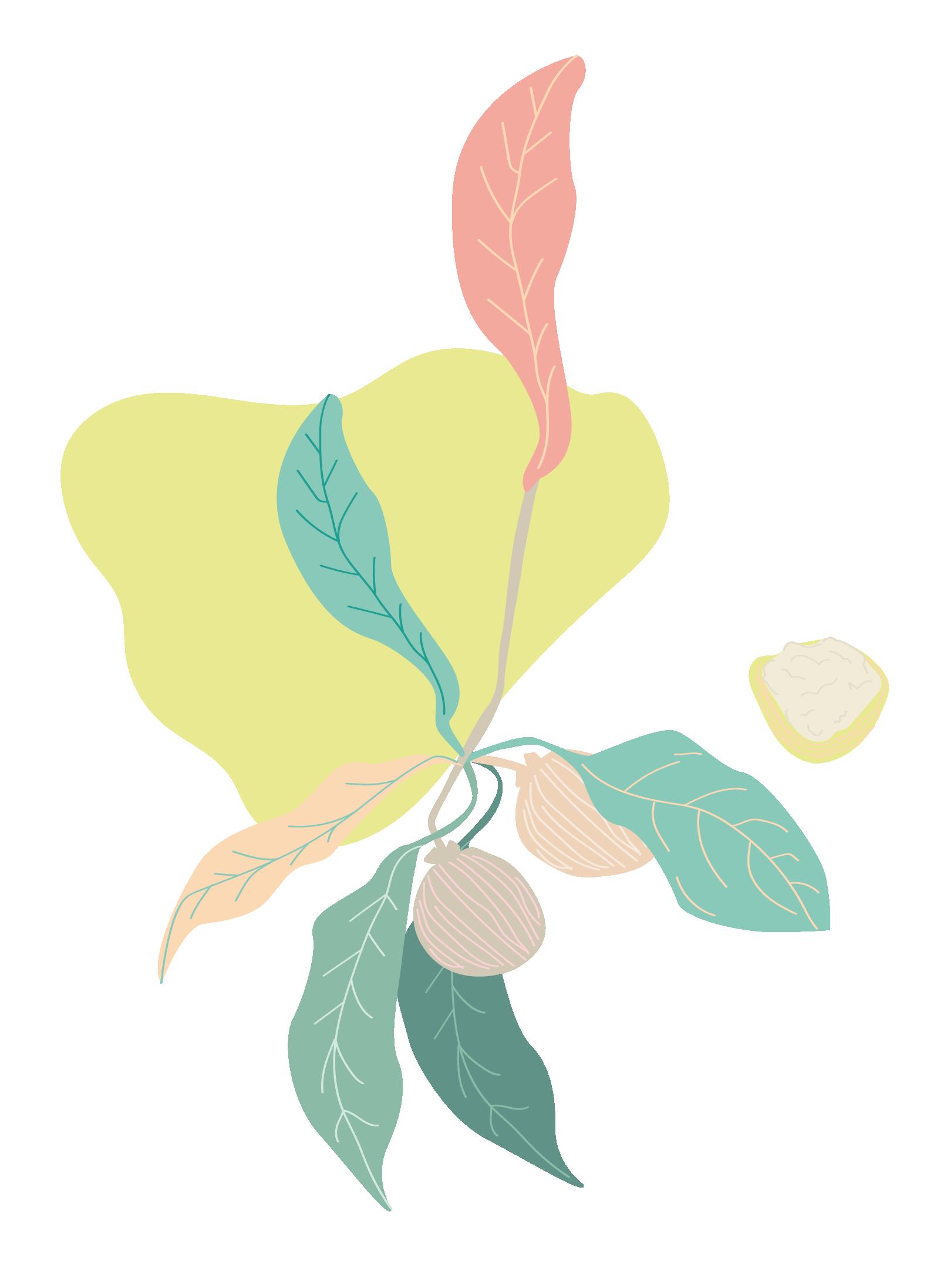 Pure Oskar Flower Graphic