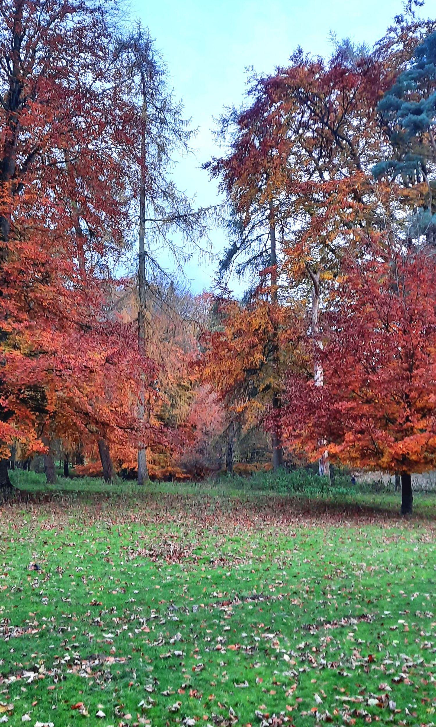 Autumn in the Curragh