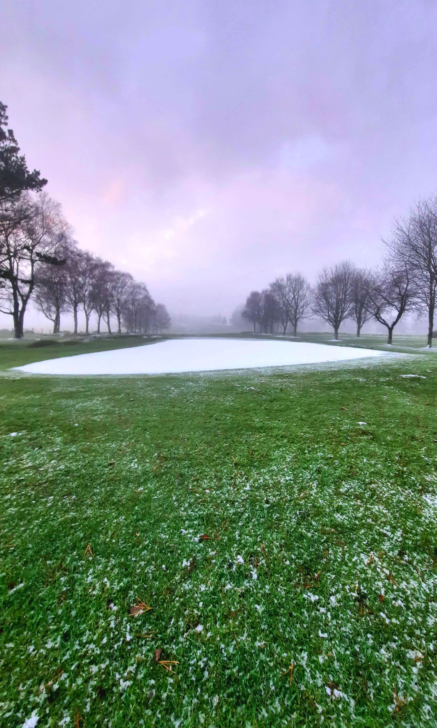 Winter in the Curragh