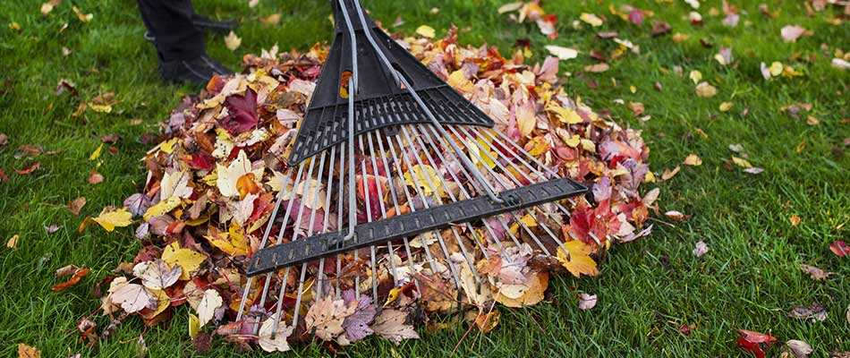 Leaves being raked into a pile in College Station, TX.