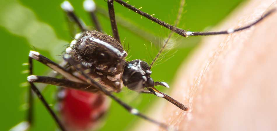 Why You Need to Keep Mosquitoes out of Your Yard