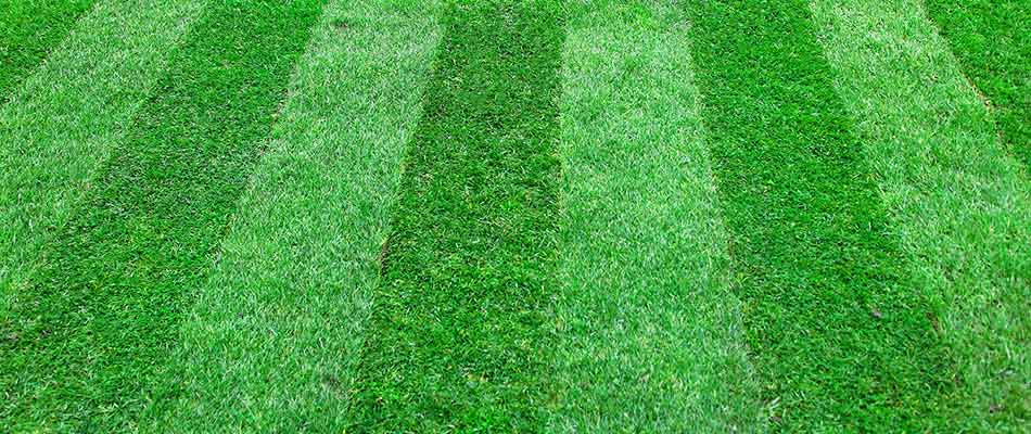 Freshly mowed lawn of a client in College Station, TX receiving fertilization treatments from Greener LawnScapes.