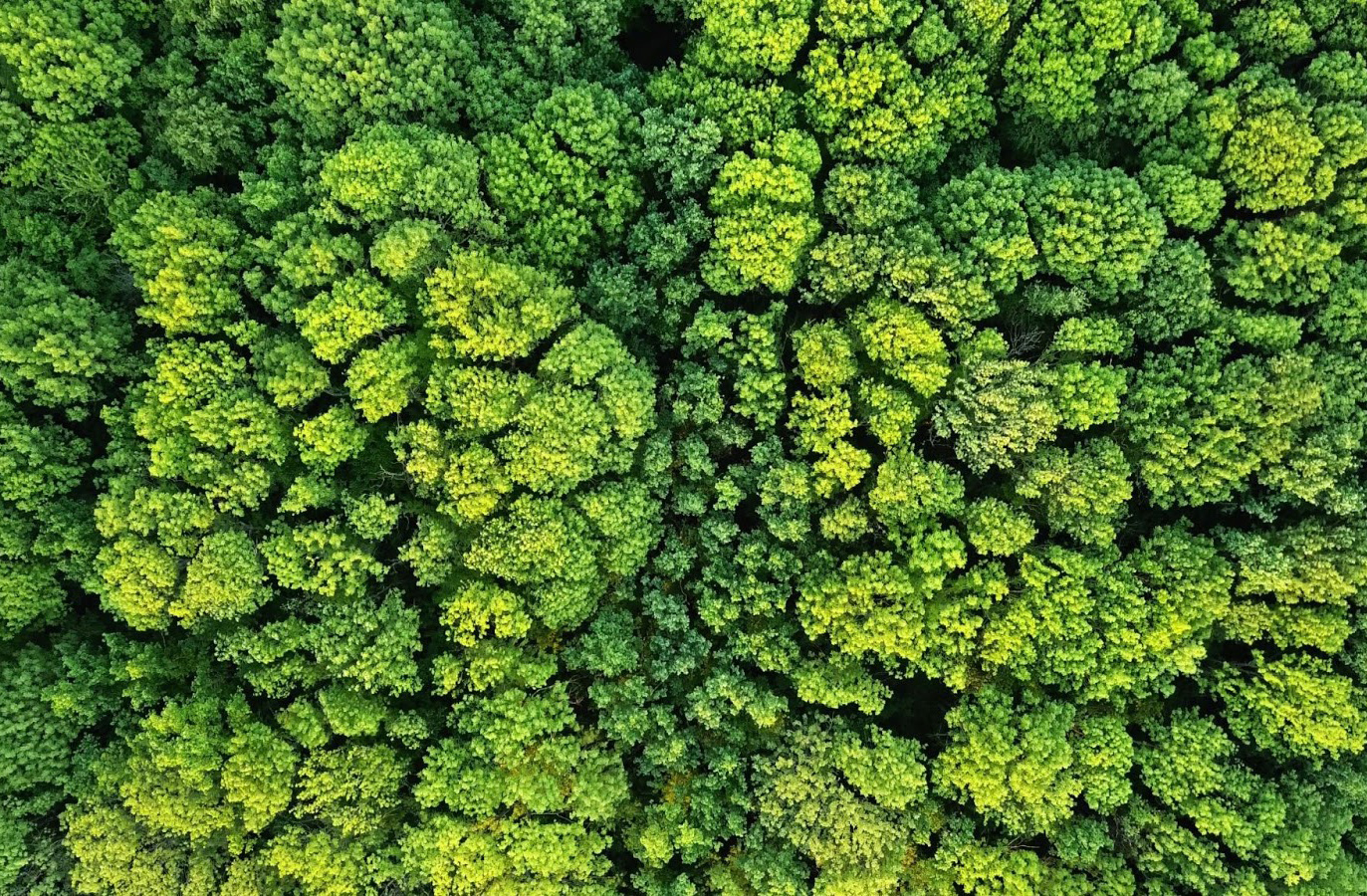 An aerial view of a lush green forest reminds us of the importance of protecting air quality this Earth Day