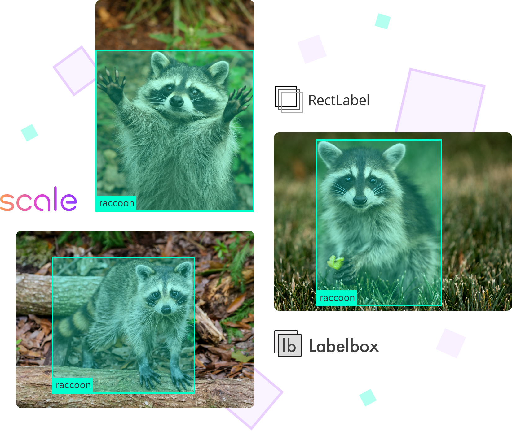 Labeling a Raccoon in various tools (Scale, LabelBox, RectLabel)