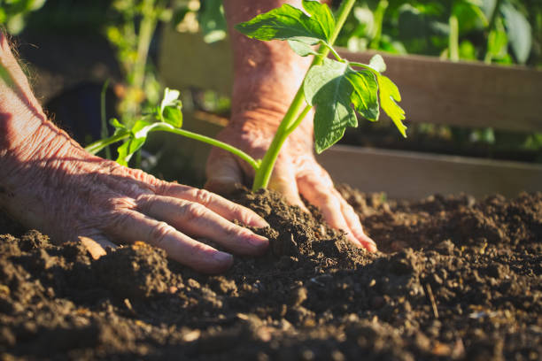 8 Gardening Tips for this Summer