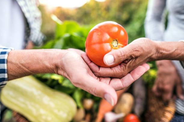 Finding Purpose Through Gardening