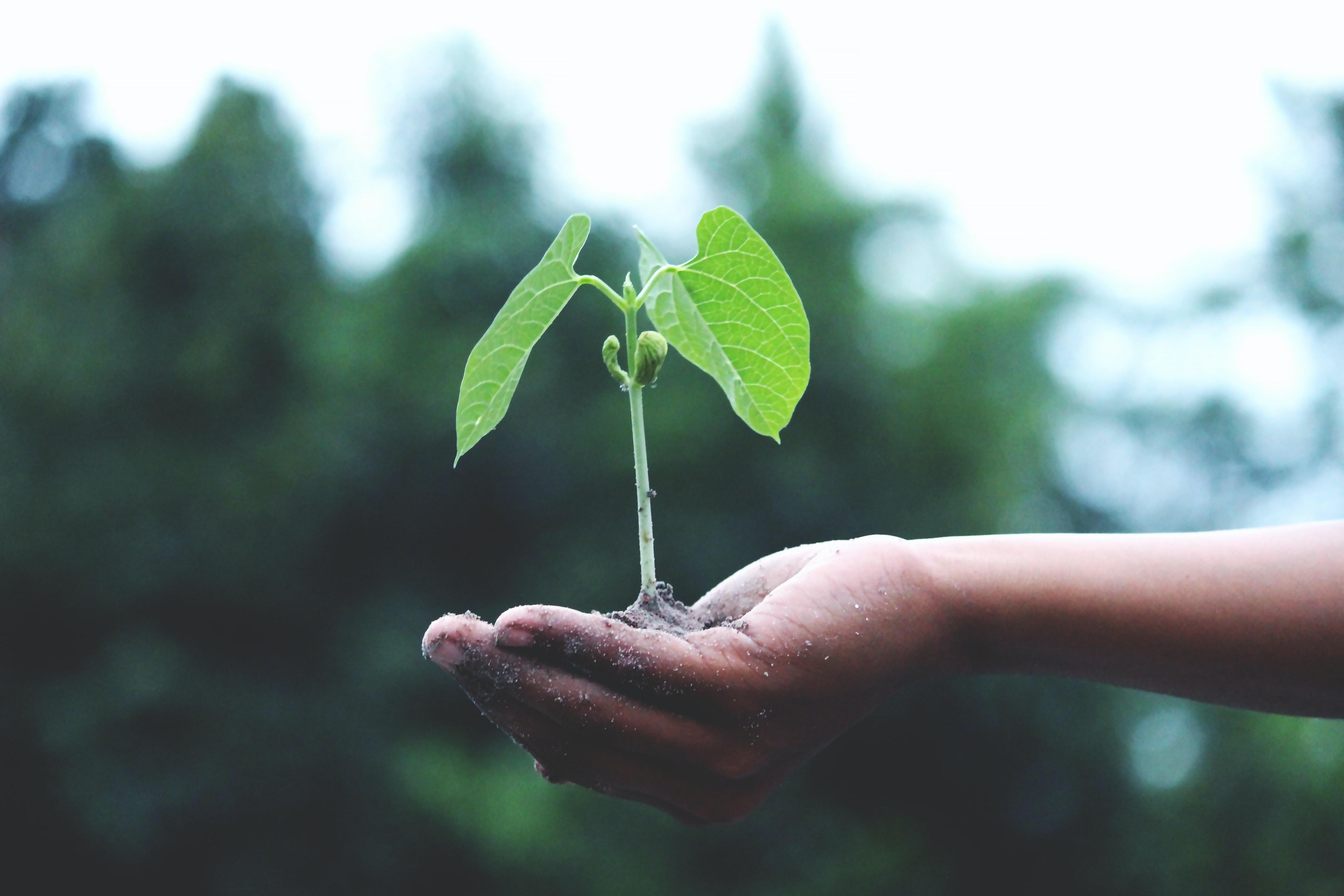 Illustrasjonsbilde for bærekraft: Hånt som holder en plante.