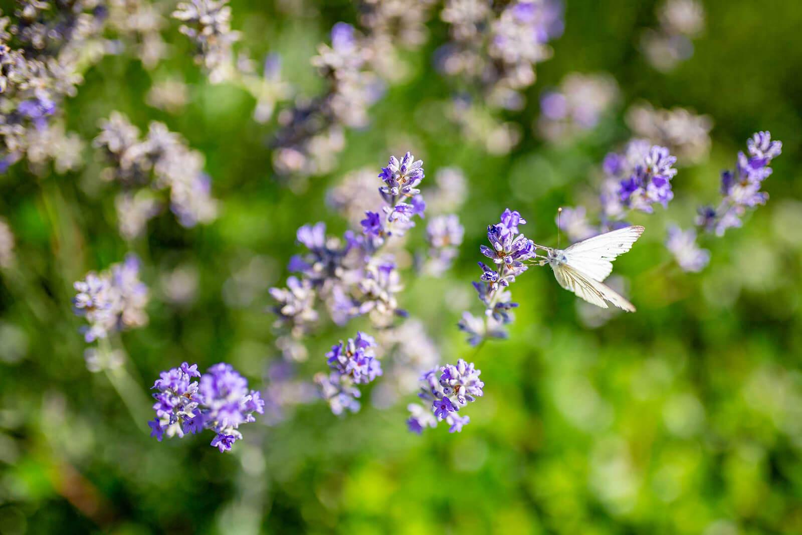 Bloemen Hoeve Binnenplaats Heuvelland