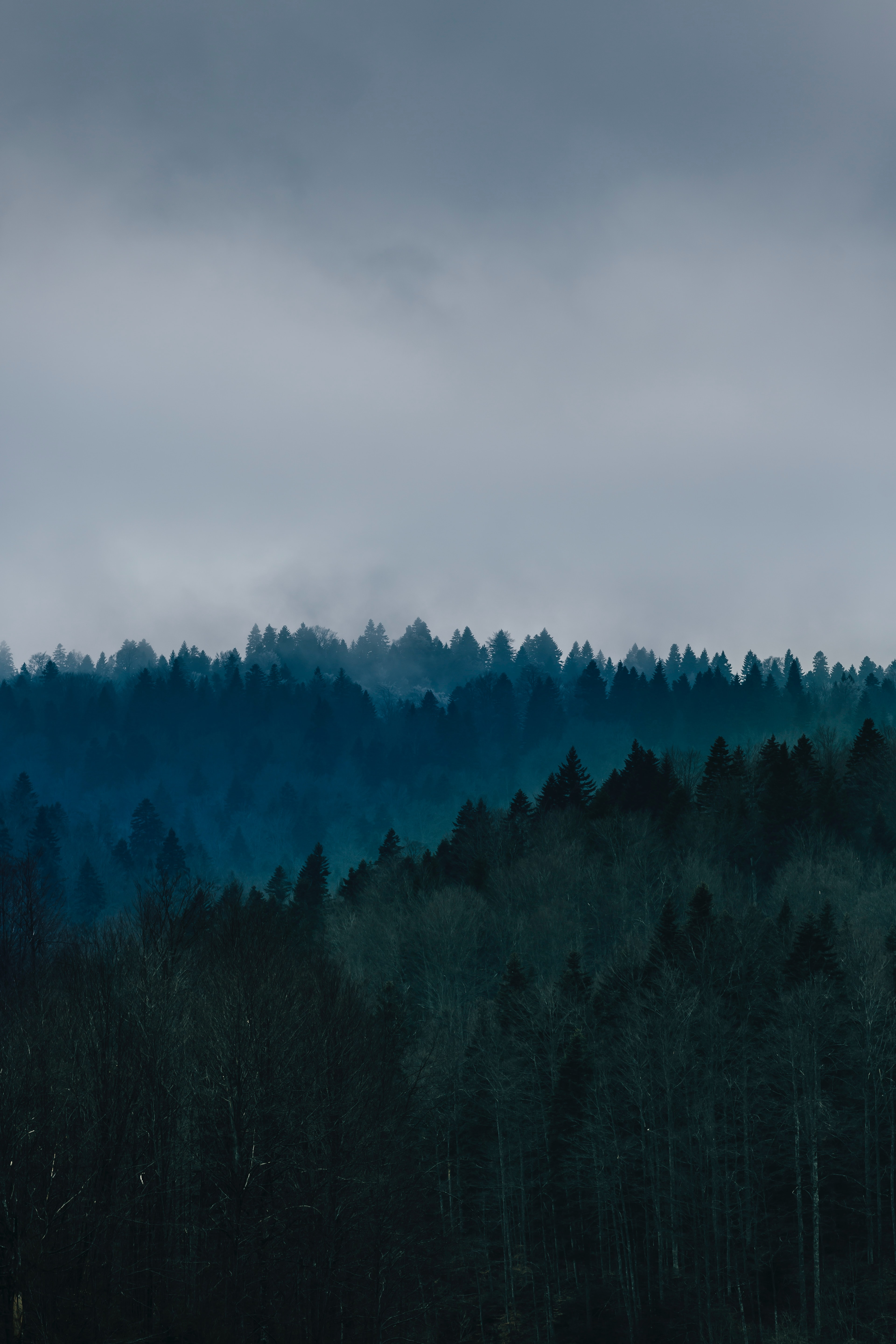 photo of trees  in Oregon