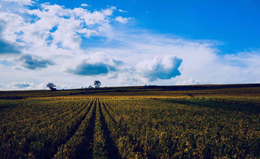 A new path for agriculture with Agcurate