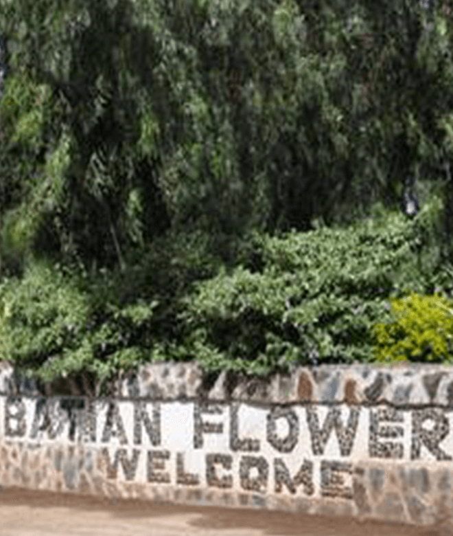 Batian Flowers