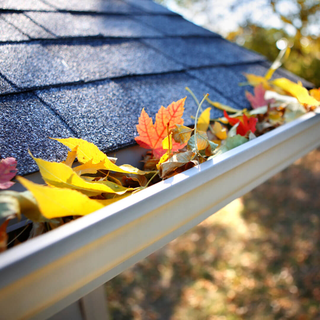 fall leaves clogging gutter