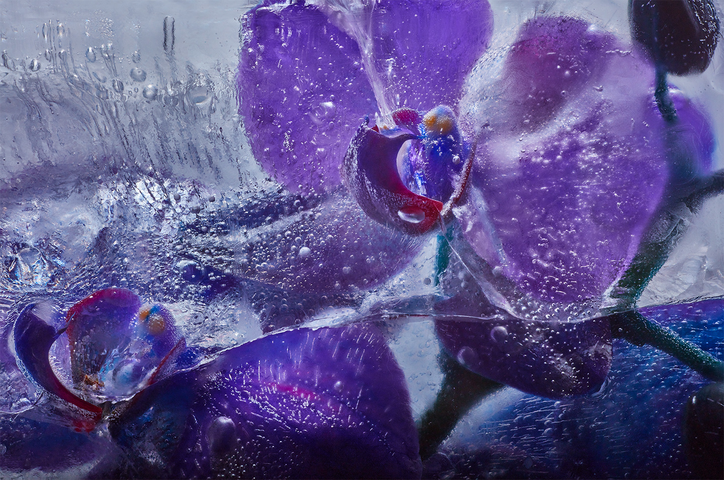Purple and blue orchids.