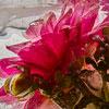 Orchid Flower, Sunflower, Hibiscus, Flowers, Floral, Decor