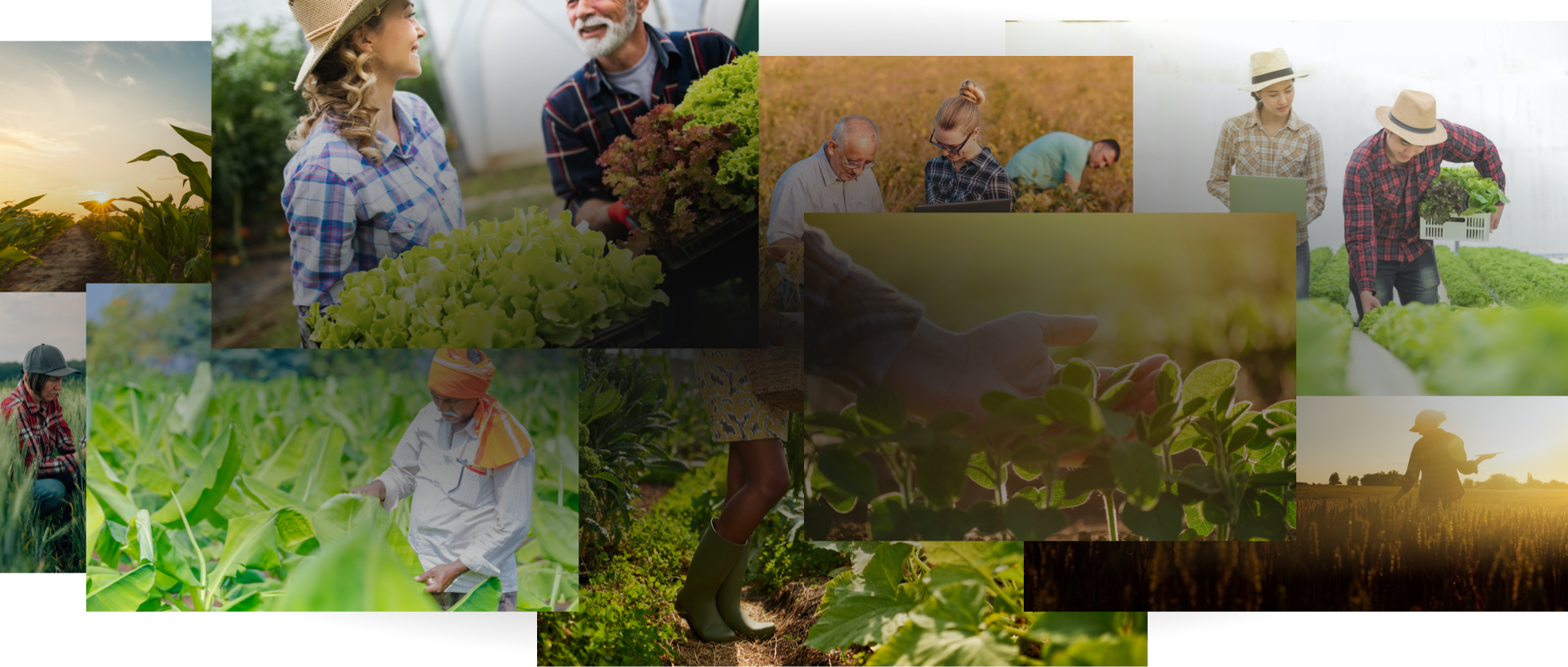 Collage of farmers