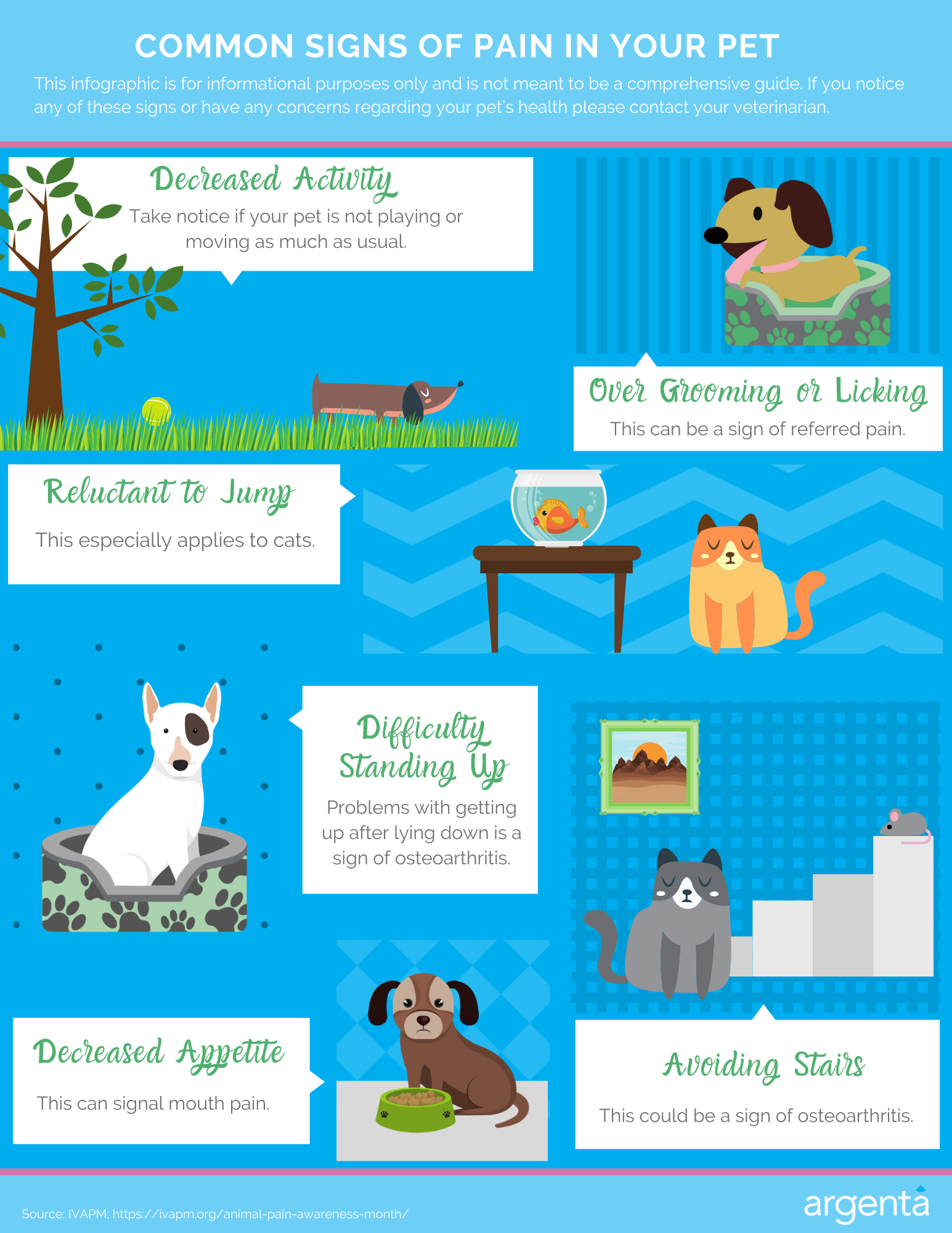 Common Signs of Pain In Your Pet
