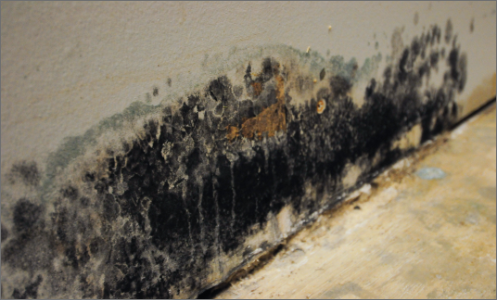 Common mold removal cost