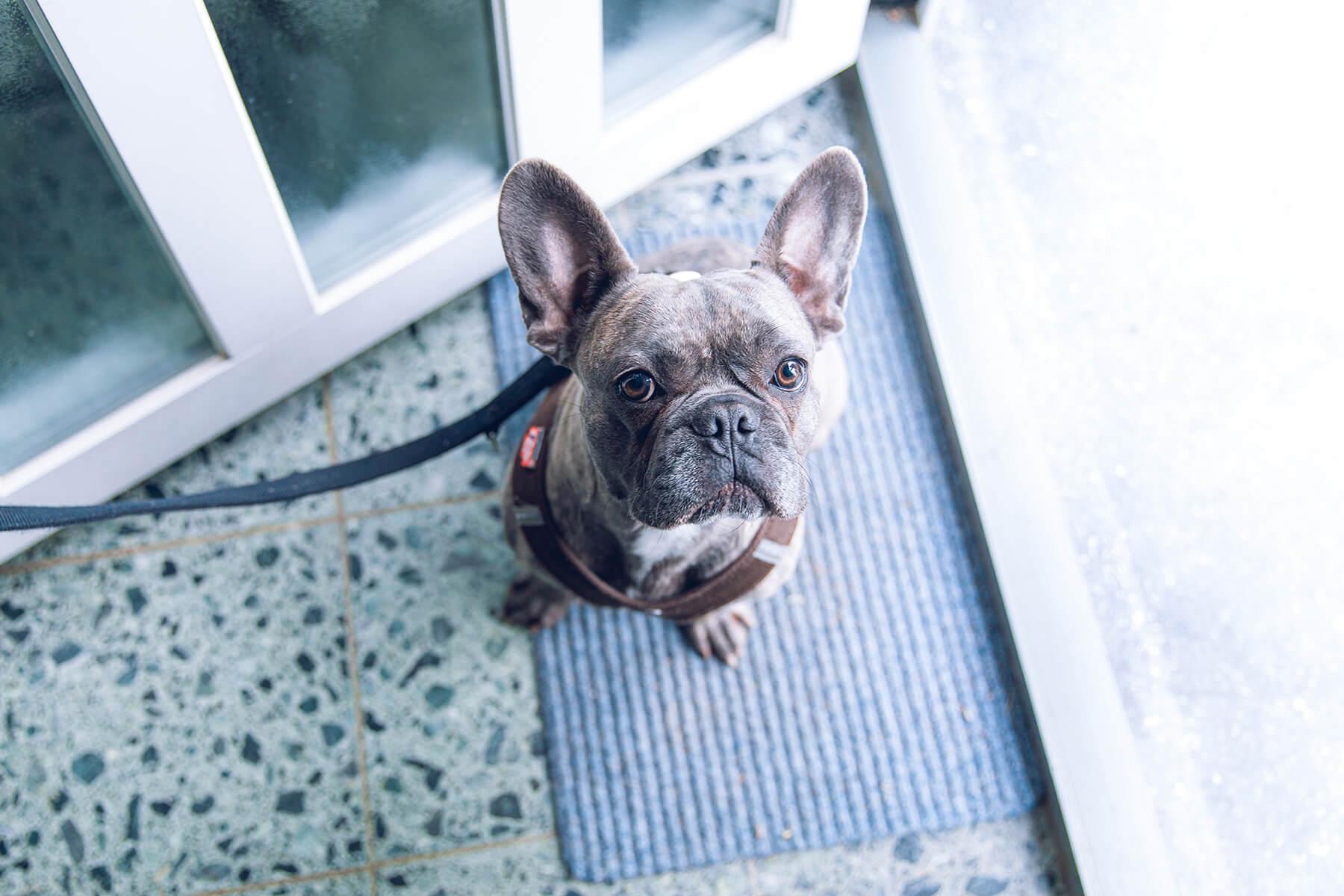 Dog on a ferry