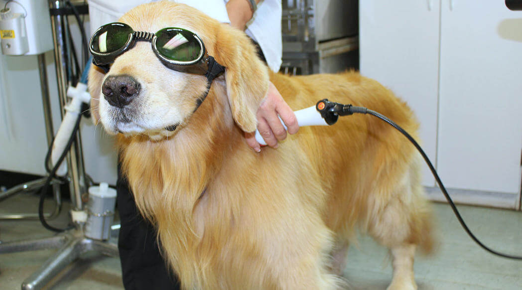 What Is Laser Therapy For Dogs Aand How Does It Work?